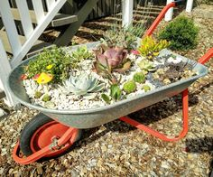 And my succulent wheelbarrow planter is finally complete and sitting pretty at the front of my house // via Amber Toeleiu