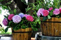 camila gysling wedding flowers