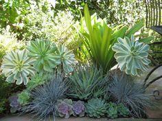 plantas suculentas - Pesquisa Google