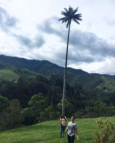 The moment you realize Giants were real and roamed the earth in Salento Colombia ... How are these palm trees even real  felt like I was in an Enid Blyton book or something #tallestpalmtrees#salento #valledecocora #adventure#wanderlust#fairytales#folklore#travel #colombia #beauty #thegentleyogi #ahimsa by thegentleyogi http://bit.ly/AdventureAustralia
