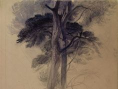 erotic trees | Study of Part of the Trees in Turner's 'Crossing the Brook', John Ruskin, before 1872