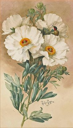 Paul de Longpré  'Matilija poppies', 1901 by Plum leaves, via Flickr. look  for the bird..