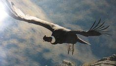 Quebrada del Condorito, donde los Condores Vuelan