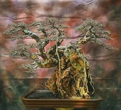 Bonsai Styles, The Rock, Painting, Art, Art Background, Painting Art, Kunst, Paintings, Performing Arts