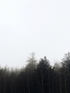 avoyageforever:  Beyond the trees.