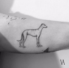 Violeta Arus is a poetic tattoo artist from Madrid, Spain who creates a graceful tiny black work, filling them by unique poetic lightness. Violeta shines best with natural motifs often an all mixtu… Delicate Tattoo, Subtle Tattoos, Dog Tattoos, Mini Tattoos, Minimalist Tattoo Meaning, Minimalist Tattoos, Greyhound Tattoo, Greyhound Art, Redwood Tattoo