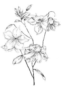 Idea for a tattoo - rhododendron inspired