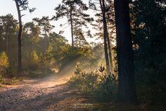 Photo Shadows and Light in nature reserve Bosserheide part of National Park De Maasduinen by William Mevissen. Landscape and Nature Photography at www.williammevissen.nl.