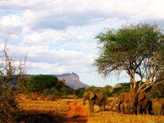 Elefanti 1
