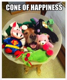 This dog modeling the summer's hottest fashion, the cone of happiness