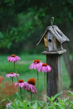 Weathered Bird House and Purple Cone Flowers