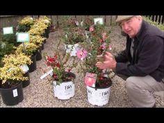 Early spring Garden Color at Reynolds Garden Shop