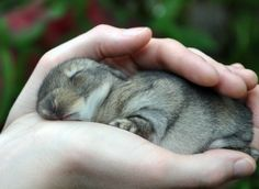 Palmful of Snoozing Bun. O.M.G.