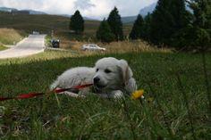Maggie:in montagna a Vezzena