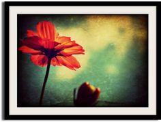 Fine Art Photograph by VanillaExtinction on Etsy, $20.00