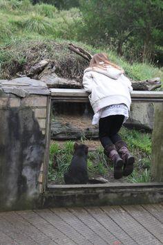 Tasman National Park : Tasmanian Devil Unzoo - 15 février 2015