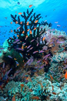 Scuba diving on the Great Sea Reef is one of the top activities in Fiji. #Jetsetter Nukubati Private Island