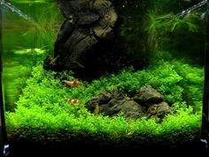 NANO aquarium Enrico Fortuna