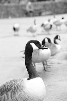 cheap canada goose mens tremblant full zip hoody black