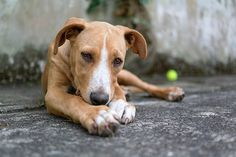 Oh, those puppy eyes. Just by gazing at their owners, dogs can trigger a response in their masters' brains that helps them bond, a study says. Contact Help, Two Way Street, Puppy Eyes, New Puppy, Dog Care, I Love Dogs, Beautiful Creatures, Fur Babies, Your Dog