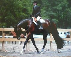 """AQHA HUNTER UNDER SADDLE """"Kiss Me Sweetie"""" Quarter Horses For Sale, Hunter Under Saddle, Warmblood Horses, Western Pleasure, Dream Barn, Chivalry, Horse Pictures, Horse Breeds, Horse Photography"""