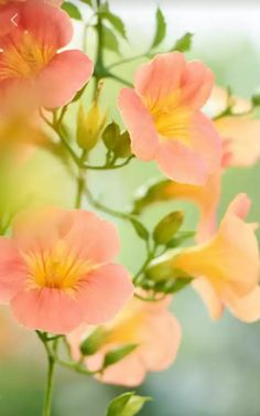 Sunset Wallpaper, Flower Wallpaper, Beautiful Roses, Beautiful Flowers, Peach And Green, Colorful Garden, Flower Pictures, Pink Love, Flower Power
