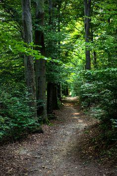 Wander the wood Mental Break, Long Way Home, Forest Path, Forest Wallpaper, Old Trees, Bosnia, Pathways, Mother Earth, Wander
