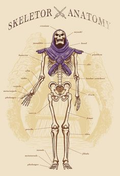 Skeletor Anatomy