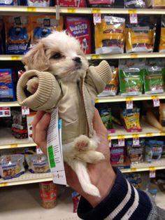 The cutest puppy O filhote mais fofo