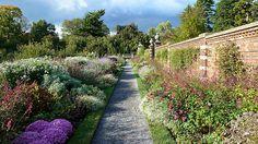 Asters & Sage in the Walled Garden Old Westbury Gardens, Walled Garden, Aster, Vineyard, Sidewalk, Outdoor, Outdoors, Fenced Garden, Vine Yard
