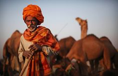 India ~ camel herder stands for a portrait in the animal market