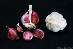 BURGUNDY ~ Deep solid burgundy cloves, 8 to 12 cloves per bulb. Very striking medium to large bulbs. Clove tips not elongated like other Creole strains and the colors are darker. Garlic Farm, Planting Garlic, Garlic Seeds, Perennial Bulbs, Homestead Gardens, Garlic Bulb, Organic Seeds, Dream Garden, Perennials