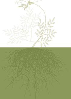 illustration of olive branch, made by Marcella Fiore for Poggiolecci.