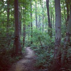 Hartshorne Woods: Grand Tour Trail - New Jersey Trails | AllTrails.com