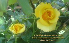 Proverbs 14:5