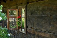 Window & Flower