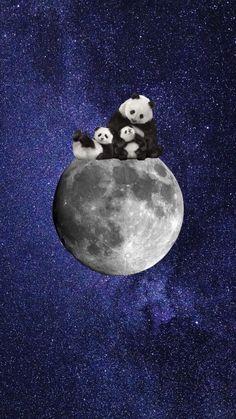 Fairy Wallpaper, Disney Wallpaper, Cartoon Wallpaper, Cute Panda Wallpaper, Bear Wallpaper, Panda Wallpapers, Cute Wallpapers, Animals Beautiful, Cute Animals