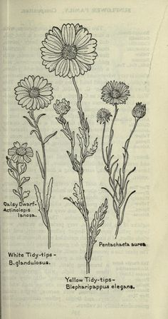 (1915) - Field book of western wild flowers, - Biodiversity Heritage Library