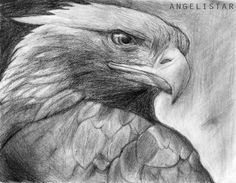 deviantART: More Like Realistic Tiger Drawing in Pencil by JSHarts