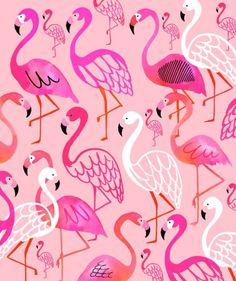 Scion Felicity flamingo wallpaper pink flamingo on a white ...