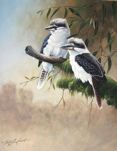 eric shepherd art   eric shepherd › Portfolio › Kookaburras