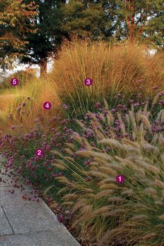 Think beyond the classic combos to make grasses more than just fall accents Ornamental Grass Landscape, Landscape Borders, Landscape Design, Garden Design, Tall Ornamental Grasses, Tall Grasses, Landscaping Plants, Front Yard Landscaping, Prairie Garden