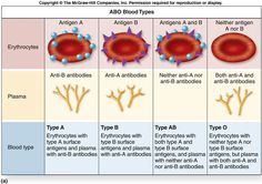 The reciprocal relationship between antigens on the red blood cells and antibodies in the serum is known as Landsteiner's law. Karl Landsteiner suggested that… Type A Type B, Blood Plasma, Medical Laboratory Science, Nursing Profession, Blood Groups, Human Body Anatomy, Medical Information, Medical Facts, Nclex