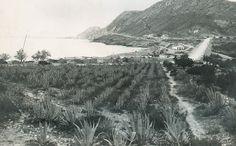 De la colección de Fco Moreno Saez (AMA) La Alfufereta en 1930. Paco Rodriguez Valderrama