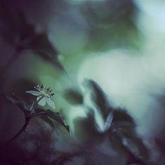 【sakura.saki】さんのInstagramをピンしています。 《. . あいちトリエンナーレ全部周り終わりました!チケットもう一枚あるから、また行けたらいいなぁ😊 . 瀬戸芸にあいトリ、足助ゴエンナーレと、アート尽くしの夏でした。…秋も継続の予感😁 . 山にも行きたいなー❗️ . #花 #植物 #森 #山 #登山 #ハイキング #緑 #自然 #マクロ #マクロレンズ #白駒池 #長野 #flowers #green #plants #forest #mountains #hiking #macro #nature #nagano #japan #canon #eos70d #canon70d》