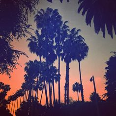 About #LosAngeles I LOVE everything! #paradise #California