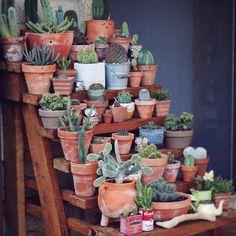 35 imágenes de suculentas (deco-inspiración) | Plantas