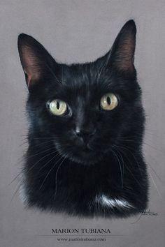 Художник,Tubiana Marion | OK.RU Black Cat Drawing, Black Cat Painting, Black Cat Art, Black Cats, Photo Chat, Pastel Art, Domestic Cat, Cat Tattoo, Beautiful Cats