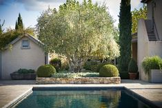 Suzanne Turley Landscapes — Paretai Outdoor Spaces, Outdoor Decor, Landscape Design, Landscapes, Home Decor, Outdoor Living Spaces, Paisajes, Scenery, Decoration Home