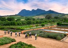 Vegetables and fruit gathered daily from the garden at  Babylonstoren, South Africa